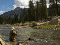 Fly Fishing Mono Creek