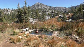 Reed Pools