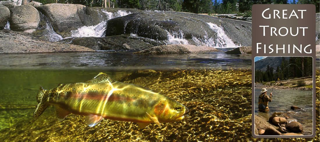 Flyfishing Instruction & Guide Service Available - Great Trout Fishing
