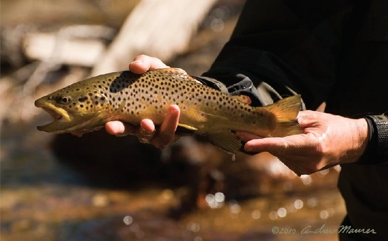 High Sierra Trout Fishing